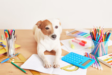 Dog Jack Russell Terrier And Chool Supplies Background. Back To School Concept. Items For School. Office Desk With Copy Space. Flat Lay. Education And School Concept. Stationery Pencils, Pens On Table