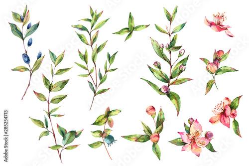 Fototapeta Watercolor Green Myrtle. Set of Vintage Watercolor Green Leaves, Twigs, Branches, Blooming flowers of Myrtle obraz
