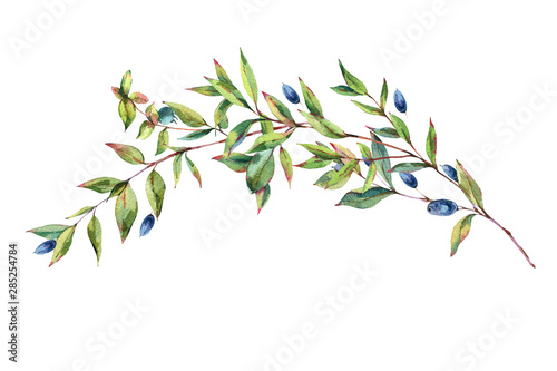 Fototapeta Watercolor Myrtle. Vintage Watercolor Greeting Card with Green Leaves, Twigs, Berries, Branches of Myrtle. obraz