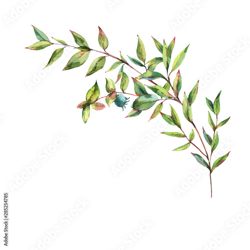 Watercolor Myrtle. Vintage Watercolor Greeting Card with Green Leaves, Twigs, Berries, Branches of Myrtle. Wall mural