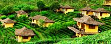 Ban Rak Thai, A Chinese Settlement In Tea Field With Fog In The Morning, Mae Hong Son, Thailand