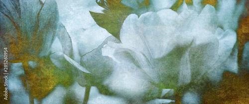 Obraz na plátně  Tulpen Trauer Karte Papier Konzept