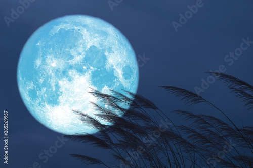 blue strawberry moon on night red sky back silhouette grass flowers Wallpaper Mural
