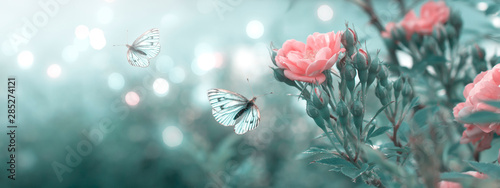 Garden Poster Floral Mysterious spring floral banner with blooming rose flowers and flying butterflies on blurred background and shiny glowing bokeh