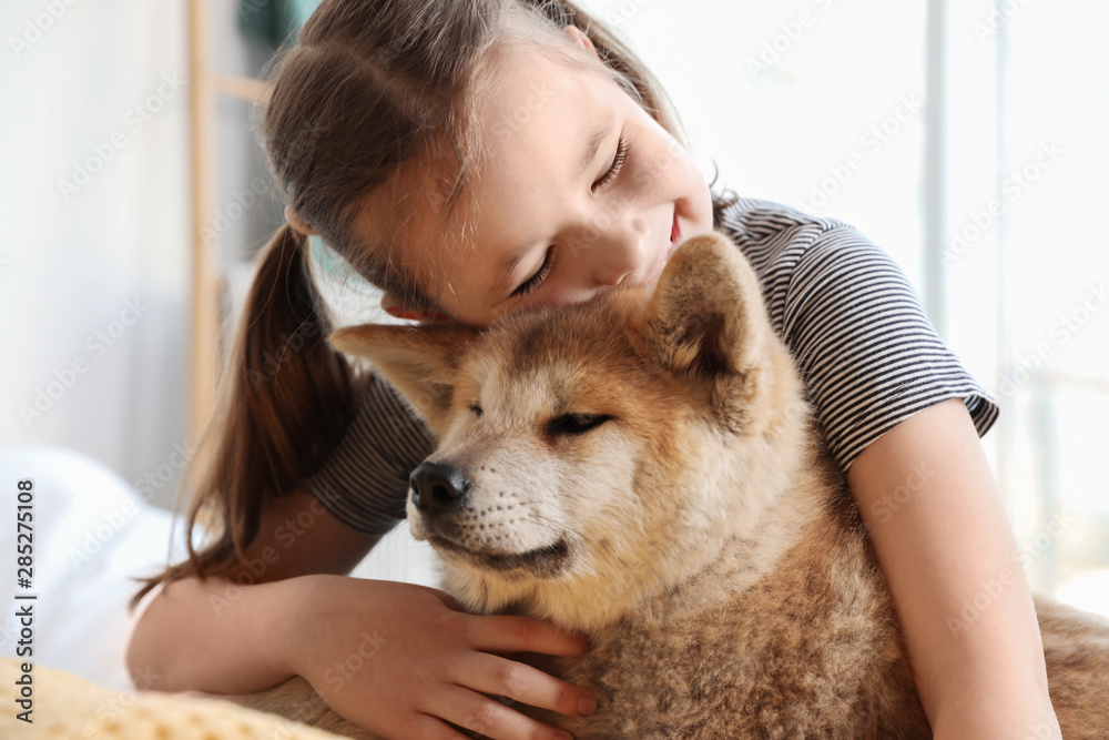 Fototapety, obrazy: Happy girl with Akita Inu dog indoors. Little friends
