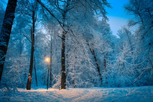 Twilight In The Winter Forest Covered With Snow A Bright Yellow Lantern Illuminates The Road In The Forest