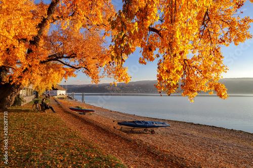 Fotografie, Obraz  Herbststimmung Insel Reichenau Bodensee