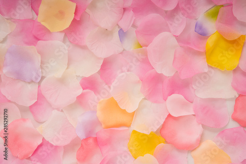 Fotomural  Abstract background of petals