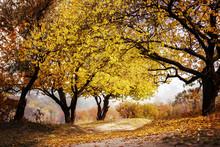 Landscape In Autumn In The Par...