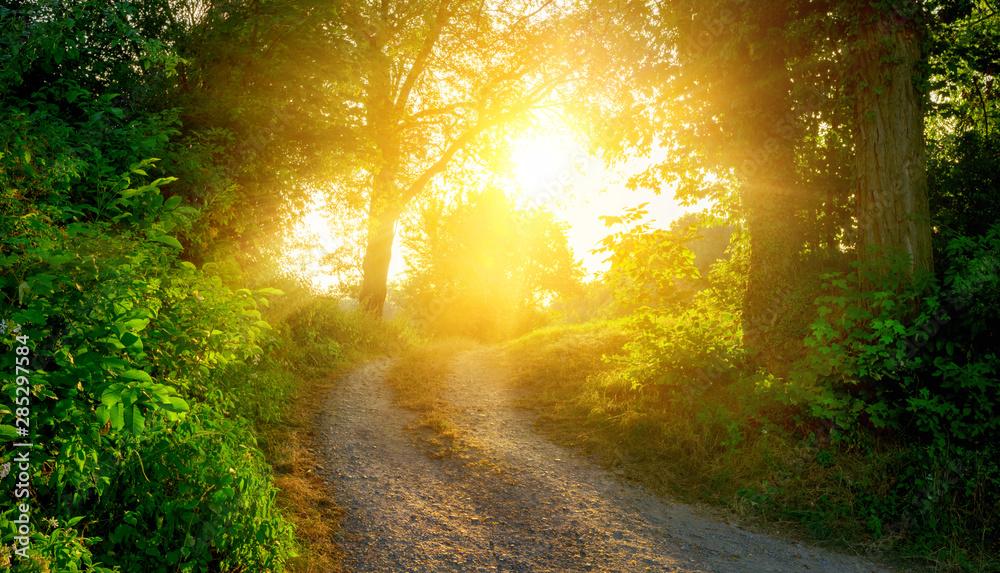 Fototapeta Rural path illuminated by the golden sun