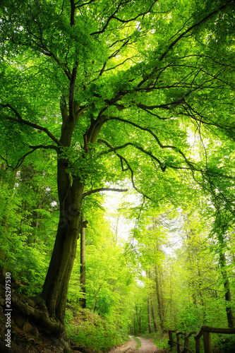 Majestic tree in green forest