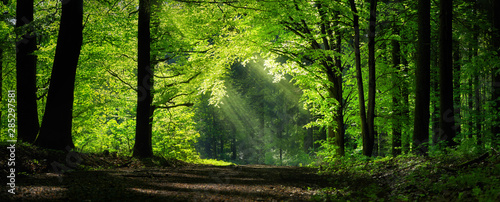 Fotobehang Bomen Natural archway shaped by branches in the forest