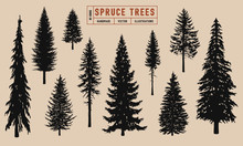 Spruce Tree Silhouette Vector Illustration Hand Drawn