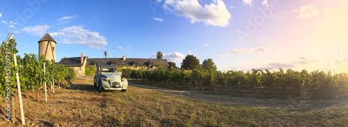 Vin > Vignoble > Paysage > Anjou > France Wallpaper Mural