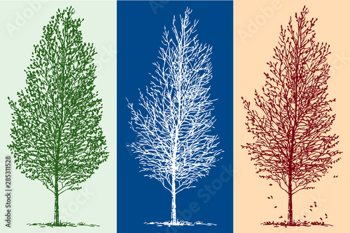 Vector image of silhouettes of birch tree in different seasons Wallpaper Mural