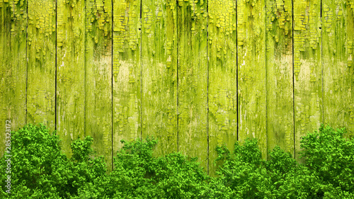 Summer banner, tree and leaves. 3d illustration, 3d rendering.