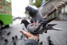 Bird Whisperer.