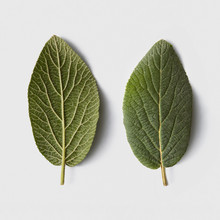 Two Fresh Mint Leaves On A Gray Background With Copy Space. Flat