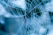 Macro Of A Spider Web With A B...