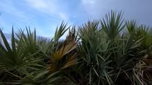 4K: Tilt Up Green Vegetation, Reveal Of Fine Sand Shore, Miami Beach, Florida