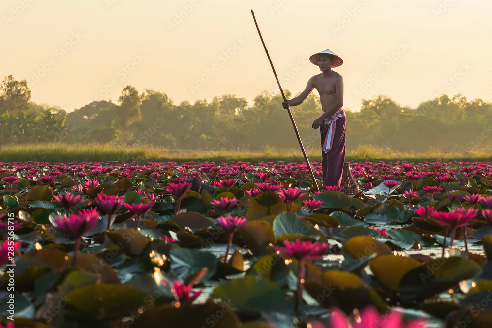 Fototapeta The Asian men villagers are on a wooden boat. Fishing in red lotus pond The fishing equipment is fish..