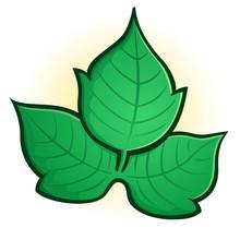 Poison Ivy Cartoon Clip Art Il...
