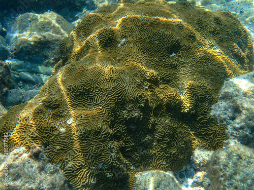Photo An underwater photo of a beautifully patterned coral.