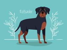Cute Rottweiler Dog Pet Character