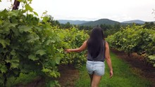 Girl Walking Among The Grapevines At A Local Vineyard In North Georgia Mountains, On Nice Summer Day, 4k.