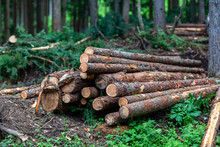 伐採現場 林業