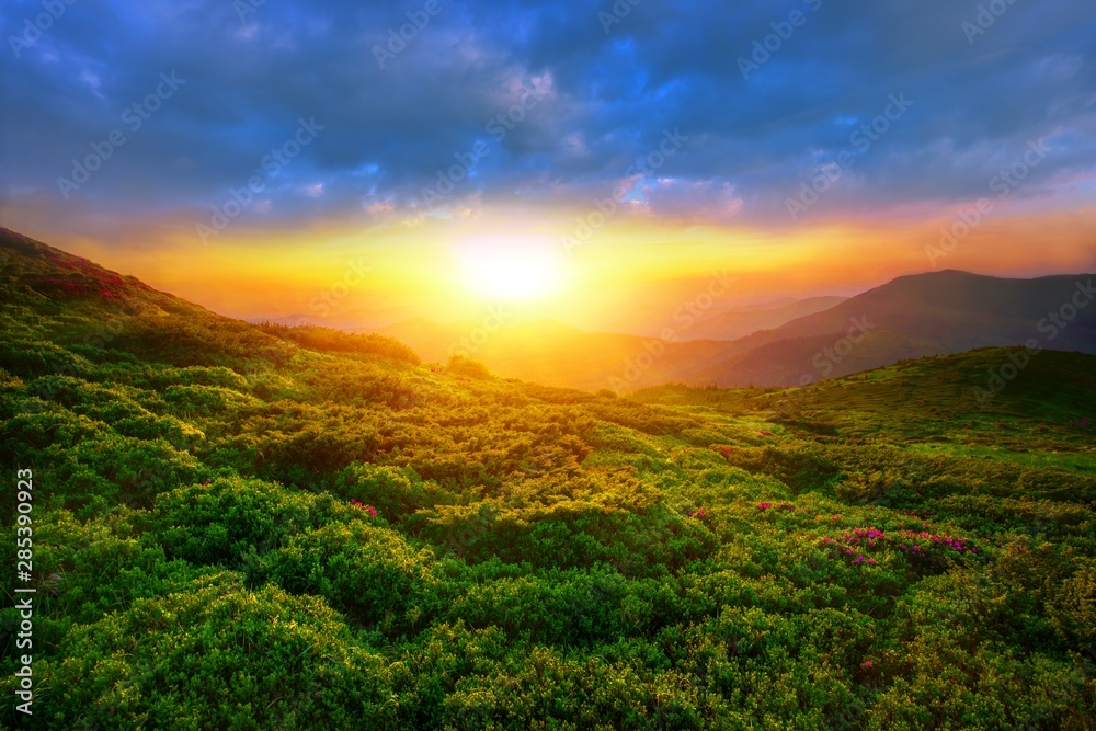 Fototapety, obrazy: amazing summer sunrise landscape in the mountains, picturesque morning view on blossom pink flowers on mountains meadow, wonderful dawn sunlight, scenic floral nature image, Europe, Carpathians