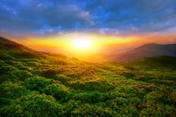 amazing summer sunrise landscape in the mountains, picturesque morning view on blossom pink flowers on mountains meadow, wonderful dawn sunlight, scenic floral nature image, Europe, Carpathians