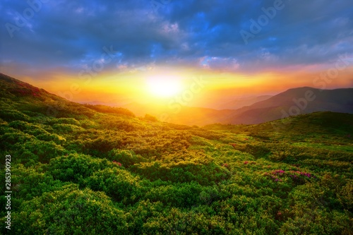 amazing summer sunrise landscape in the mountains,  morning view on blossom  rho Wallpaper Mural