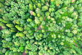 Aerial top view of summer green trees in mixed deciduous forests of Europe background.