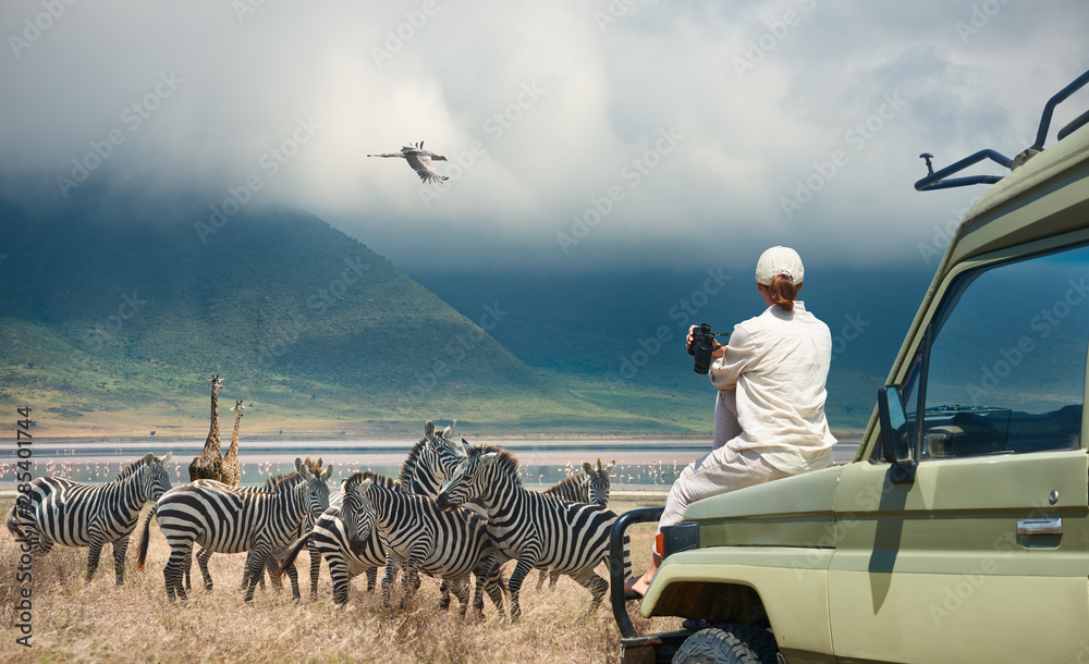 Fototapeta Woman tourist on safari-tour in Africa, traveling by car in Tanzania, watching wild animals and birds in the National park Ngorongoro