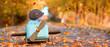 canvas print picture - buntes laub im Park - Kind und Hund spielen