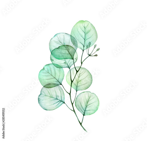 Watercolor Transparent Eucalyptus branch. Hand drawn botanical illustration isolated on white. Realistic floral design element for wedding stationery  Wall mural
