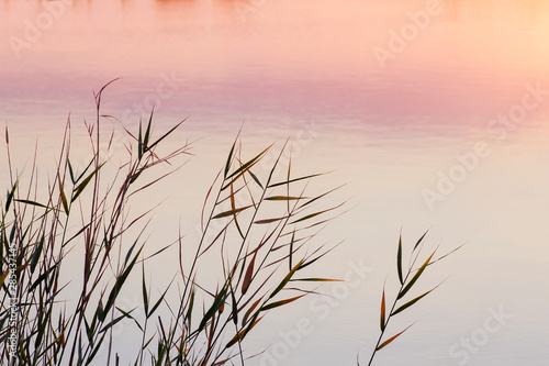 Fototapeta  Grasses in the shore of a lake at sunset