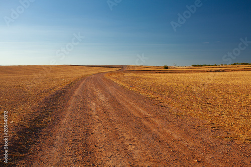 Tableau sur Toile agricultural field with yellowing grass