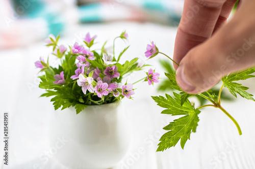 Fototapeta Miniature Purple flowers in a white vase on a white table  obraz na płótnie