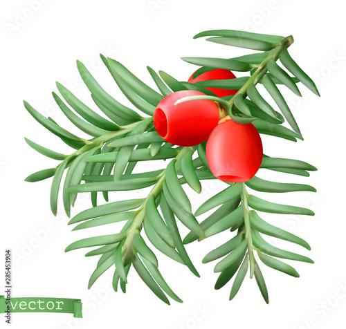 Fototapeta Yew branch, christmas decoration