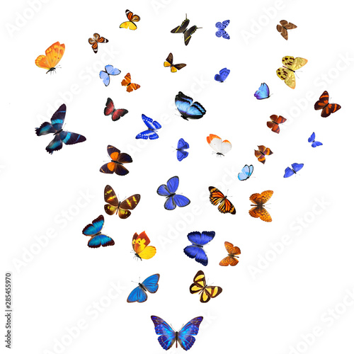 Obraz na plátně  Many different butterflies, isolated on white background