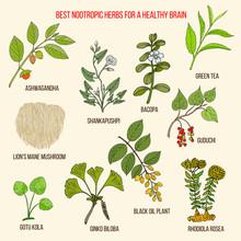 Best Nootropic Medicinal Herbs...