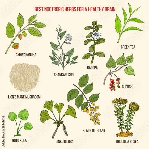 Cuadros en Lienzo Best nootropic medicinal herbs for a healthy brain