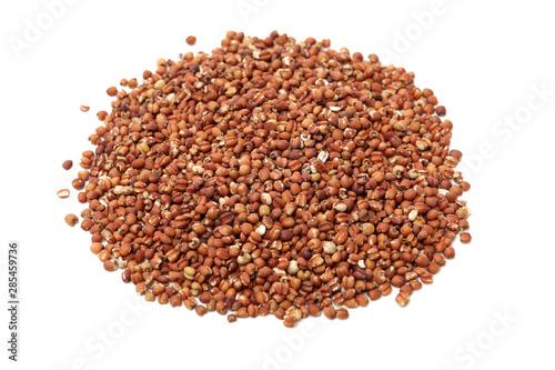 Obraz na plátne Job's tears coix lachryma jobi grain seeds on white background