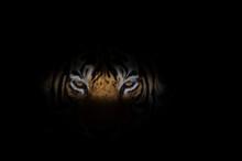Tiger Face On Black Background