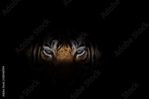 Photo sur Toile Tigre Tiger face on black background