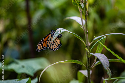 Butterfly on a Branch