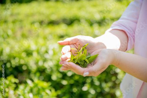 Photo 緑茶畑