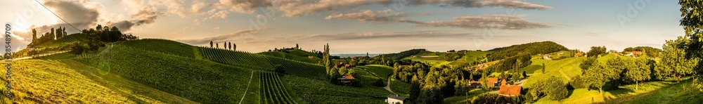 Fototapeta Panorama view of Vineyards in summer in south Styria, Austria tourist spot, travel destination.